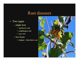 class4 ornamental diseases