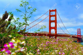 flowers san francisco flowers blussoome at the golden gate bridge in san francisco