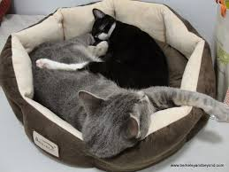California how to travel with a cat images 26 best cat yoga pose images cats yoga poses and jpg