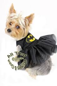 Halloween Costumes Small Dogs Halloween Costumes Dogs Big Dog Costumes Small Dog