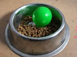 comment cuisiner du chien produit malin la gamelle qui oblige votre chien à manger doucement