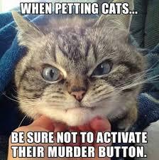 Thanksgiving Cat Meme - adorable ragdoll kitten 27th november 2015 we love cats and kittens