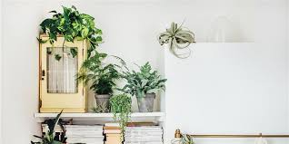 room with plants why indoor plants make you feel better