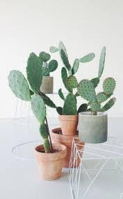 blog u2014 kaktus københavn cactus pinterest cacti and plants