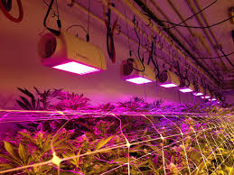 led lights for indoor plants the benefits of using led lights for indoor plants edge hill herb farm