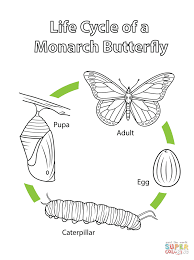 butterfly life cycle coloring page eson me
