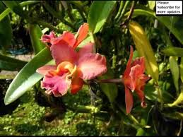 Westwood Flower Garden - orchid flower garden set of beautiful picture collection youtube