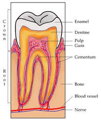 Daftar Obat Cataflam obat sakit gigi yang terbukti paling manjur mediskus