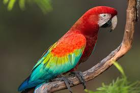 pictures of a parrot image qygjxz