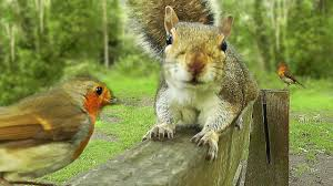 videos to watch with your cat birds and squirrels on the park
