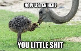 Listen Here You Little Shit Meme - now listen here you little shit memes