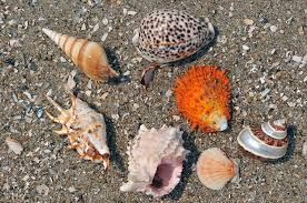 assorted seashells assorted seashells on the sand photograph by anton oparin