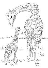imagenes de jirafas bebes animadas para colorear pagina para colorear jirafa para miles para para dibujos para