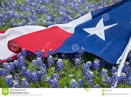 Bluebonnet Flowers - texas flag among bluebonnet flowers on bright spring day stock