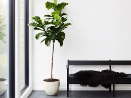 home interior plants 8 best indoor plants how to take care of them architectural digest
