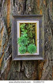 planter box stock images royalty free images u0026 vectors shutterstock