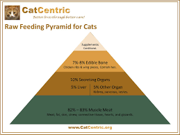 the catcentric raw food pyramid for cats makes it easy to
