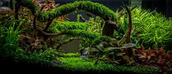 Aquascaping Freshwater Aquarium Planted Tank Enchanted Forest By Tommy Vestlie Aquarium Design