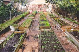 backyard farming how to start a backyard farm interview with
