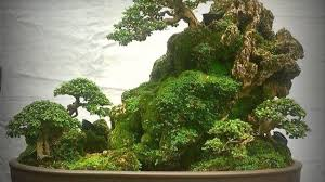 beginners of bonsai gardener should start with one or two plants