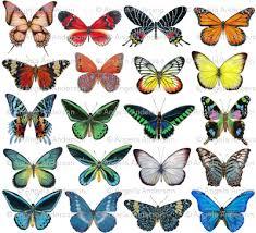 colorful butterflies fabric angelaanderson spoonflower