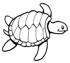 coloring page attractive turtle colouring in flowers small