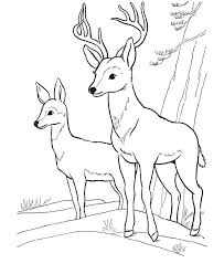 Coloring Pages Of Wild Animals 3 Funny Coloring Forest Animals Coloring Pages