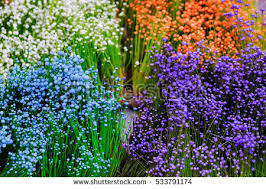 wild garden stock images royalty free images u0026 vectors shutterstock