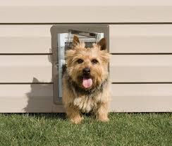 installing pet door in glass door dog doors petsafe pet doors for dogs u0026 cats