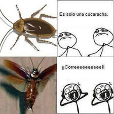 Flying Cockroach Meme - 110 best pest memes images on pinterest funny stuff hilarious