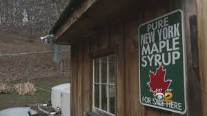 warm winter makes for new york maple syrup shortage cbs new york