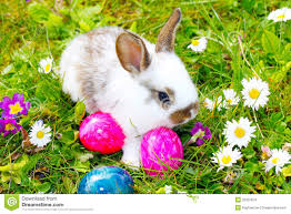 bunnies for easter easter bunny hide eggs stock image image of easter find 35337879