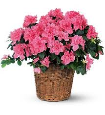 flower delivery kansas city kansas city florists flowers in kansas city mo k s flowers