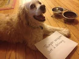 Dog Shaming Meme - 19 times a dog s act was worth the hilarious shaming sign lol scout