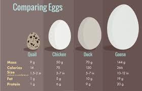 duck eggs u2014 nutrition benefits comparison