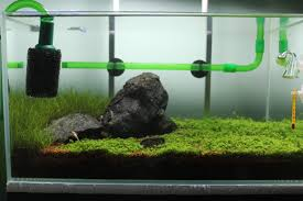 membuat filter aquarium kecil jendela kecil aquascape benny yohanes s blog