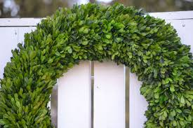 preserved boxwood wreath large preserved boxwood wreath the blaithin blair shop