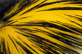 yellow pigment in penguin feathers is chemically distinct