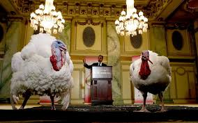 us presidential thanksgiving turkey pardoning in pictures telegraph