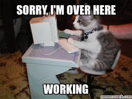 Working Cat Meme - working