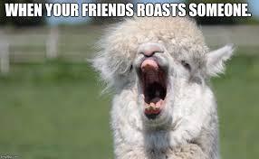 Alpaca Meme - alpaca hahahaha imgflip
