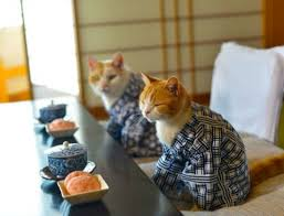 traveling with cats images Follow these cute cats as they travel japan excuse meme jpg