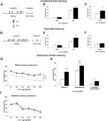 hippocampal hyperexcitability underlies enhanced fear memories in
