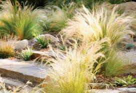 ideas for landscaping with ornamental grasses pdf