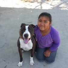 Creature Comforts Pet Sitting Shadowridge Veterinary Hospital U0026 Creature Comforts Pet Hotel 12