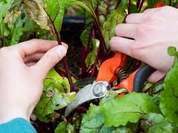 Methods Of Controlling Plant Diseases - how to prevent plant diseases hgtv