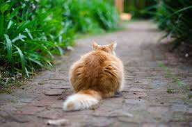 how to take care of a cat a guide for first time cat owners
