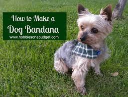 how to make a bandana bandanas and doggies
