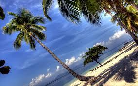 Palm Tree Wallpaper Palm Tree Lights 6960085