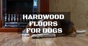 Do Dogs Scratch Laminate Floors How To Select The Best Hardwood Floors For Dogs Repairdaily